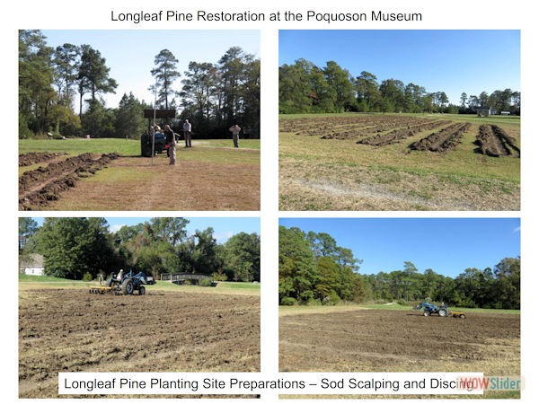 LongleafPineRestorationProject001