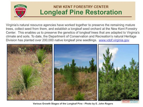 LongleafPineRestorationProject006