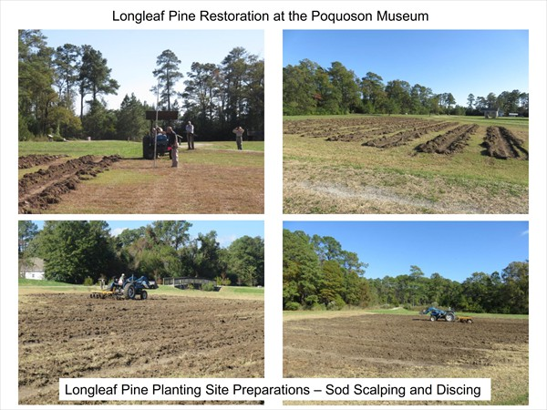 Longleaf Pine Restoration Project - November 2016 Update_001