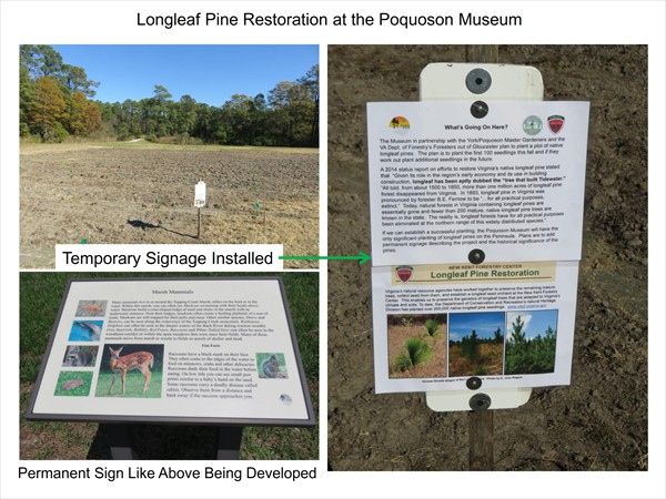Longleaf Pine Restoration Project - November 2016 Update_004