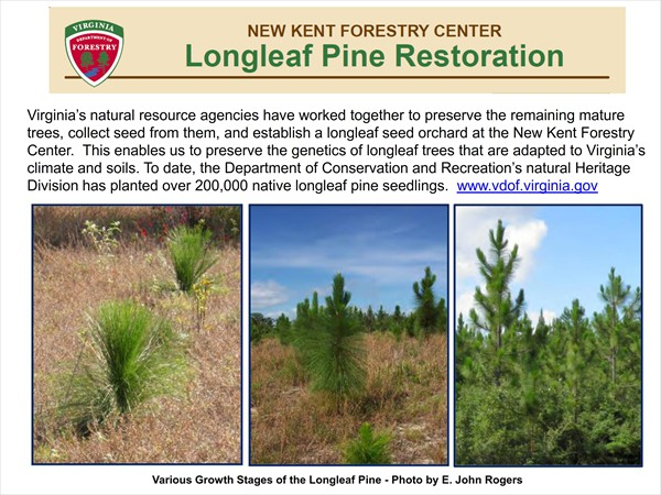 Longleaf Pine Restoration Project - November 2016 Update_006